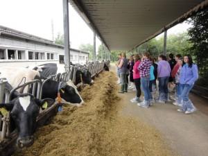 Zentrum für Tierhaltung und Technik in Iden – Bereich Rinder
