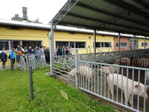 Zentrum für Tierhaltung und Technik in Iden – Bereich Schweine