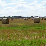 Das Stroh muss noch von den Feldern